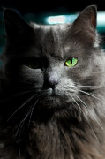 Veterinary Photo Prints - Stare Down Print by Joann Vitali