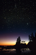Perseus Posters - Starfield Over A Group Of Coastal Trees Poster by David Nunuk