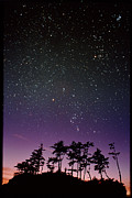 Starfield Framed Prints - Starfield Over Trees Framed Print by David Nunuk