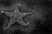 Amber Crago - Starfish