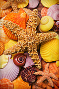 Orange Framed Prints - Starfish and seashells  Framed Print by Garry Gay
