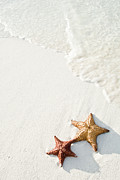 High Angle View Art - Starfish On Tropical Beach by Mehmed Zelkovic