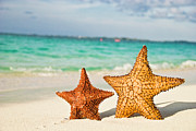 Horizontal Prints - Starfish On Tropical Caribbean Beach Print by Mehmed Zelkovic