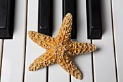 Keyboards Prints - Starfish Piano Print by Garry Gay
