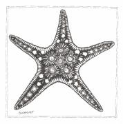 Beach Drawings Prints - Starfish Print by Stephanie Troxell