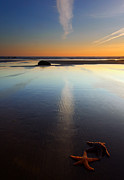 Wet Metal Prints - Starfish Sunset Metal Print by Mike  Dawson