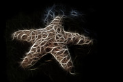 Starfish Digital Art - Starfish by Tilly Williams