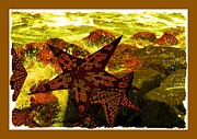 Posters On Mixed Media - Starfish by Tisha McGee