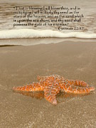 Fish Christian Art Posters - Starfish Washed Ashore Genesis 22 Poster by Cindy Wright