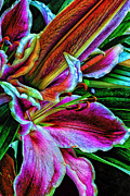Lilies Digital Art Posters - Stargazer Lilies Up Close and Personal Poster by Bill Tiepelman