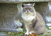 Staring Cat Photos - Staring Into The Future 2 by Fraida Gutovich