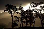 Gippsland Prints - Stark Print by Lee Stickels