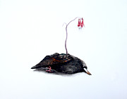 Starlings Paintings - Starling and Wild Columbine by Sarah Mushong