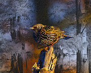 Starlings Digital Art Metal Prints - Starling Sitting High Metal Print by J Larry Walker