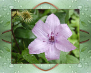 Flower Photos Framed Prints - Starry Mauve Framed Print by Bell And Todd