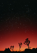 Starfield Photo Framed Prints - Starry Sky And Sunset Taken In Joshua Tree Park Framed Print by David Nunuk
