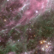 Star Birth Posters - Stars In The Tarantula Nebula Poster by Nasaesastscihubble Heritage Team