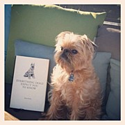 Petstagram Art - Start Reading, Humans!!! #griffon by Caitlin Schmitt