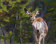 Deer Pastels - Startled by Marion Derrett
