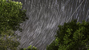 Startrails Above Tree Print by Cristian Mihaila
