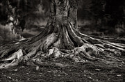 Bob Kramer - Stay Deeply Rooted While...
