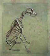 Skeleton Framed Prints - Stay... Framed Print by James W Johnson