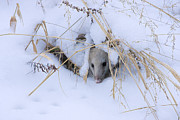 Possum Photos - Staying Warm by Ron Jones