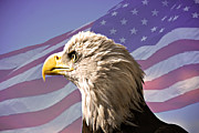 Eagle Metal Prints - Steadfast Resolve Metal Print by Adele Moscaritolo