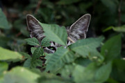 Plants Glass Art Prints - Stealthy Cat Print by Martin Morehead