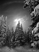 Skiing Art Print Prints - Steamboat Springs Back Country Print by Virginia Furness