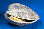 Pictures Posters - Steamed clam Poster by Frank Tschakert