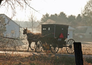 Amish Buggy Photos - Steamy Amish Horse by David Arment