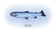 Game Drawings Posters - Steelhead Trout Poster by Ralph Martens