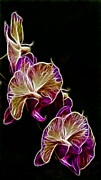 Dark Background Framed Prints - Steeped Orchid Jive Framed Print by Bill Tiepelman