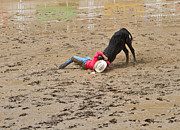 Stampede Prints - Steer wrestling on a wet and muddy afternoon at the Calgary Stampede Print by Louise Heusinkveld