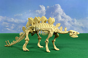 Stegosaurus Prints - Stegosaurus Dinosaur Skeleton Print by Friedrich Saurer