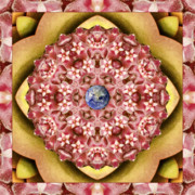 Mandala Photos - Stelliform by Bell And Todd