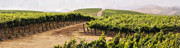 Wine Vineyard Photos - Step into My Vineyard by Marilyn Hunt