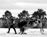Rodeo Photo Posters - Steppin Away...... Poster by Christi Willard