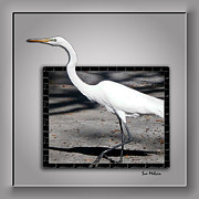 Interesting Birds Framed Prints - Stepping Out into a New Dimension Framed Print by Sue Melvin