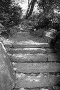 Natral Framed Prints - STEPPING STONES in BLACK AND WHITE Framed Print by Rob Hans