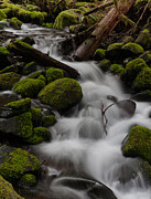Olympic National Park Prints - Stepping Stones Print by Mike Reid