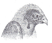 Pointalism Drawings Prints - Sterlings falcon Print by Charles Kabrich