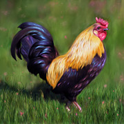 Stewart The Bantam Rooster Print by Michelle Wrighton