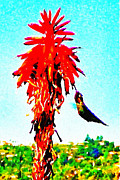 Bdmeredith Prints - Stickybeaking Hummingbird Print by Brian D Meredith