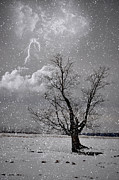 Lightning Prints - Stike In the Snow Print by Emily Stauring