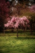 Blossom Tree Artwork Prints - Still - Ocean County Park Print by Angie McKenzie