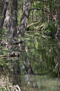 Wimberley Prints - Still Creek Reflections Print by James Woody