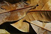 Leaf Photo Prints - Still Leaf Print by Dan Holm