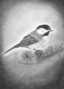 Hand Drawn Originals - Still Life of a Chickadee by Christopher Brooks